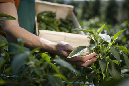 Organic Farming 61