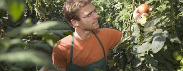 Organic Farming  62