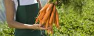 Organic Farming  70
