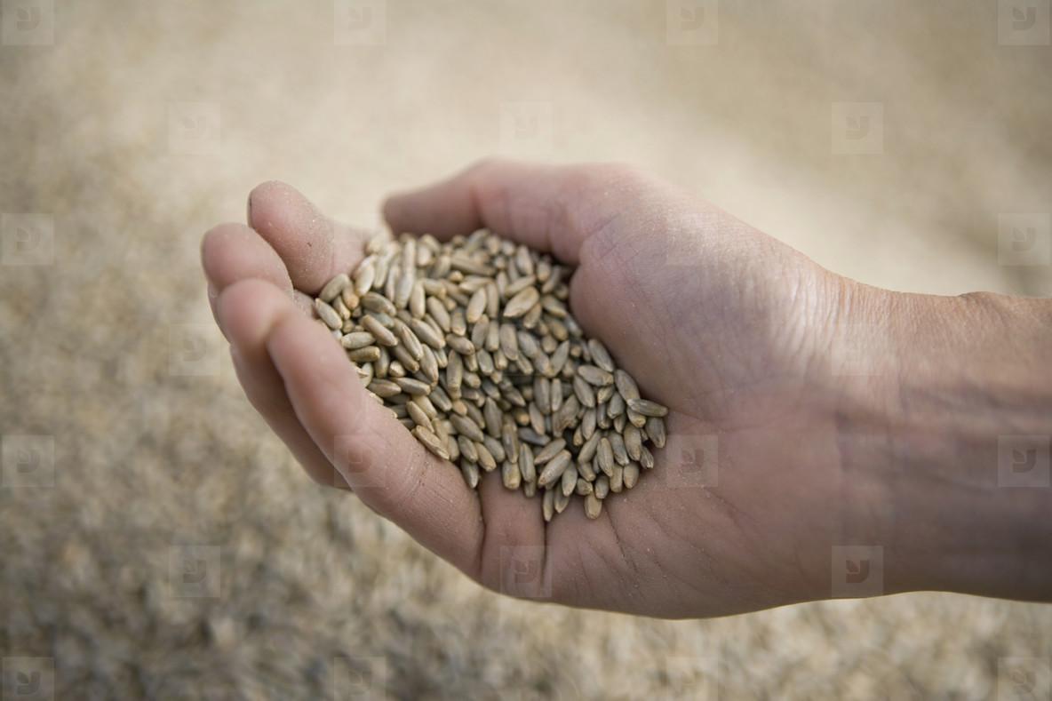 Organic Farming  73