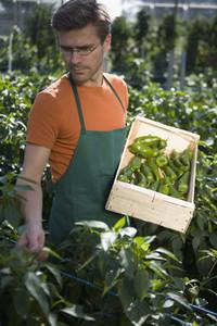 Organic Farming 74
