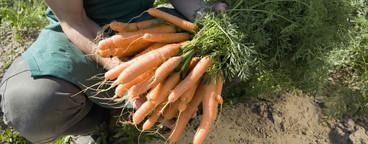 Organic Farming  76