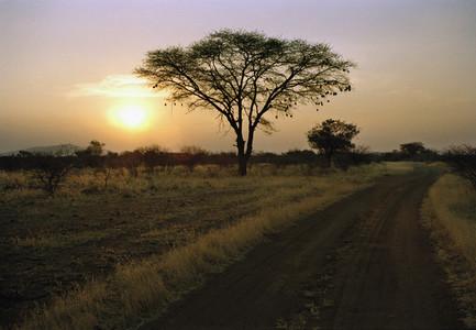 Safari Days  05