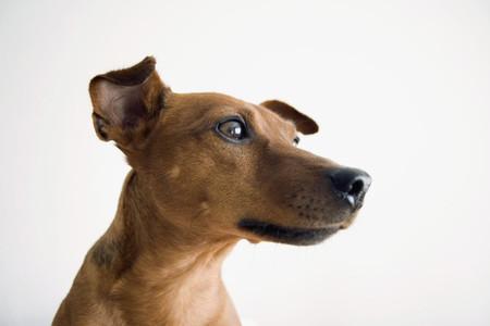 Dog Day 09