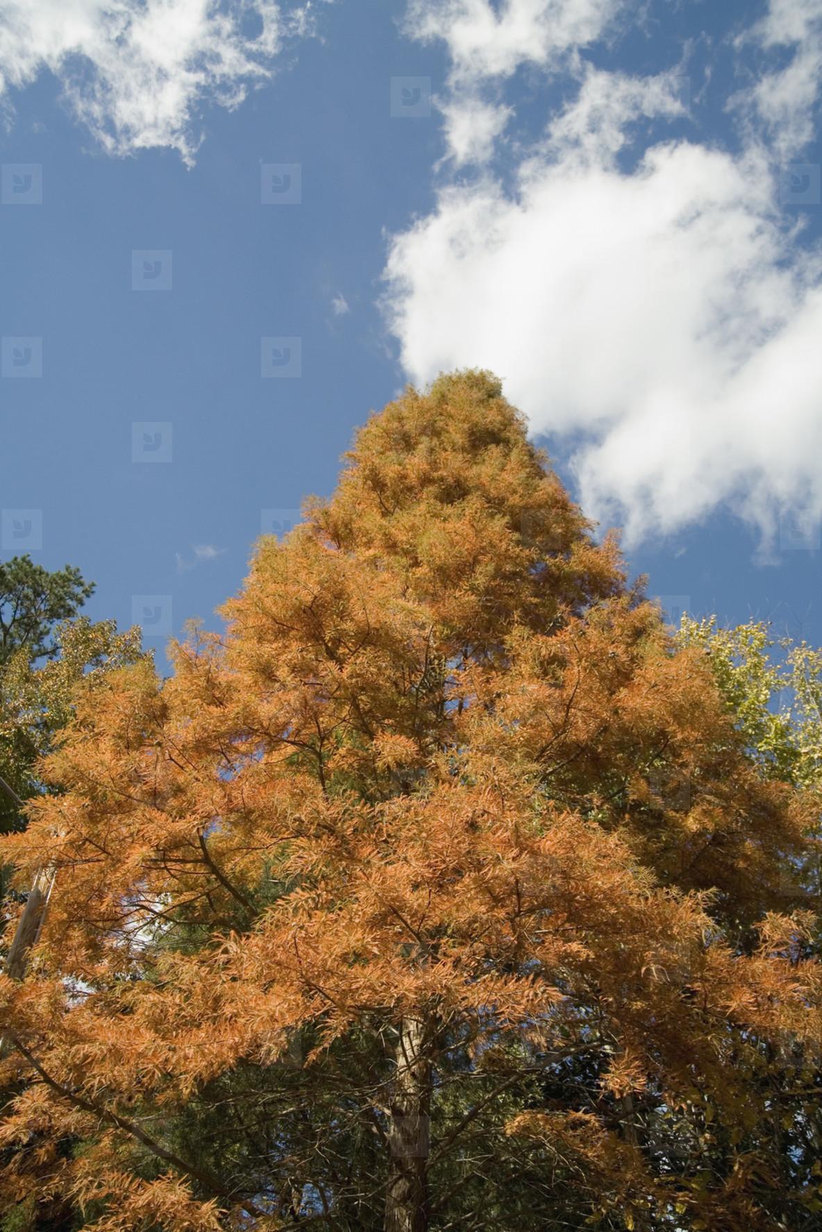 Autumn Day  05