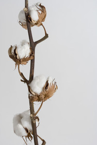 Flower Stills 01