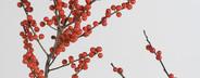 Flower Stills  02
