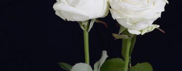 Flower Stills  04