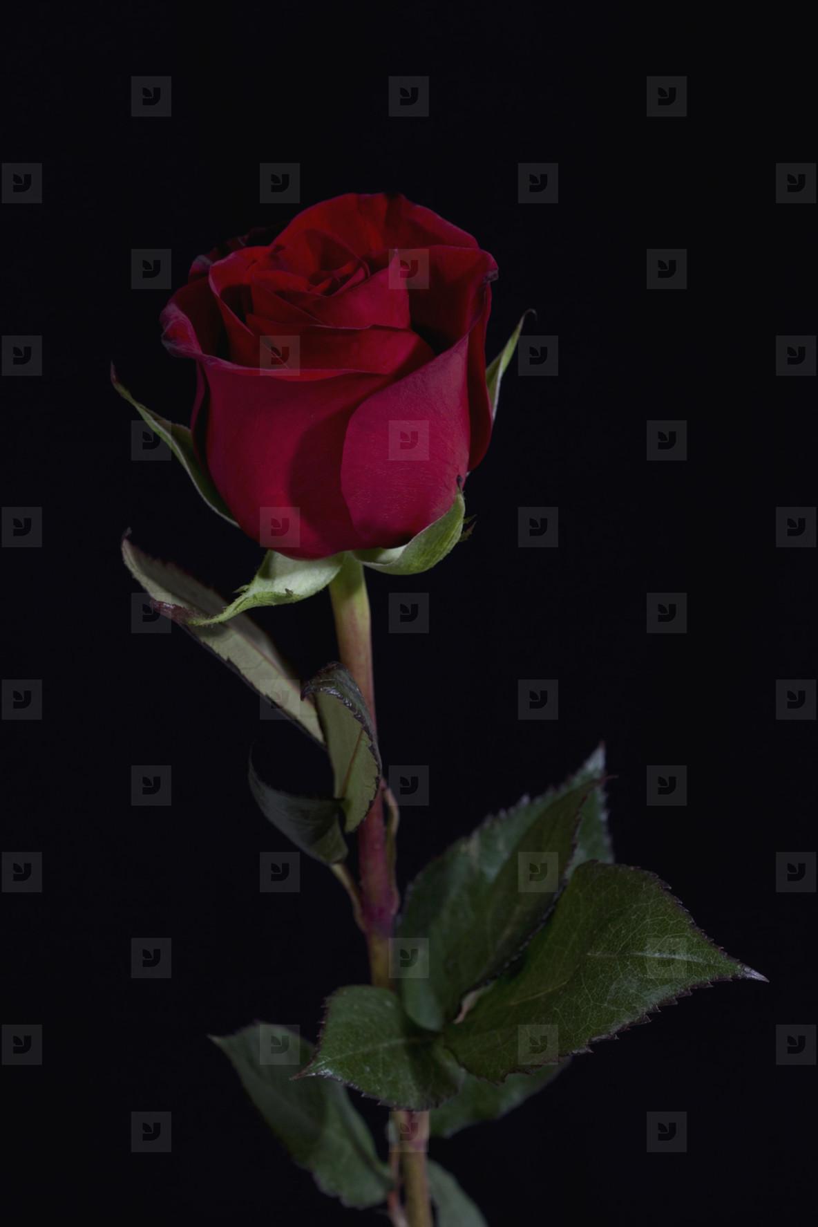 Flower Stills  08
