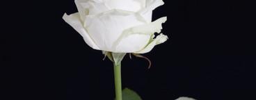 Flower Stills  11