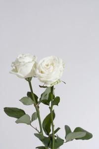 Flower Stills  14