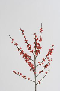 Flower Stills 15