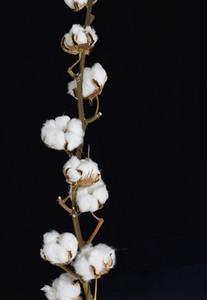 Flower Stills 16