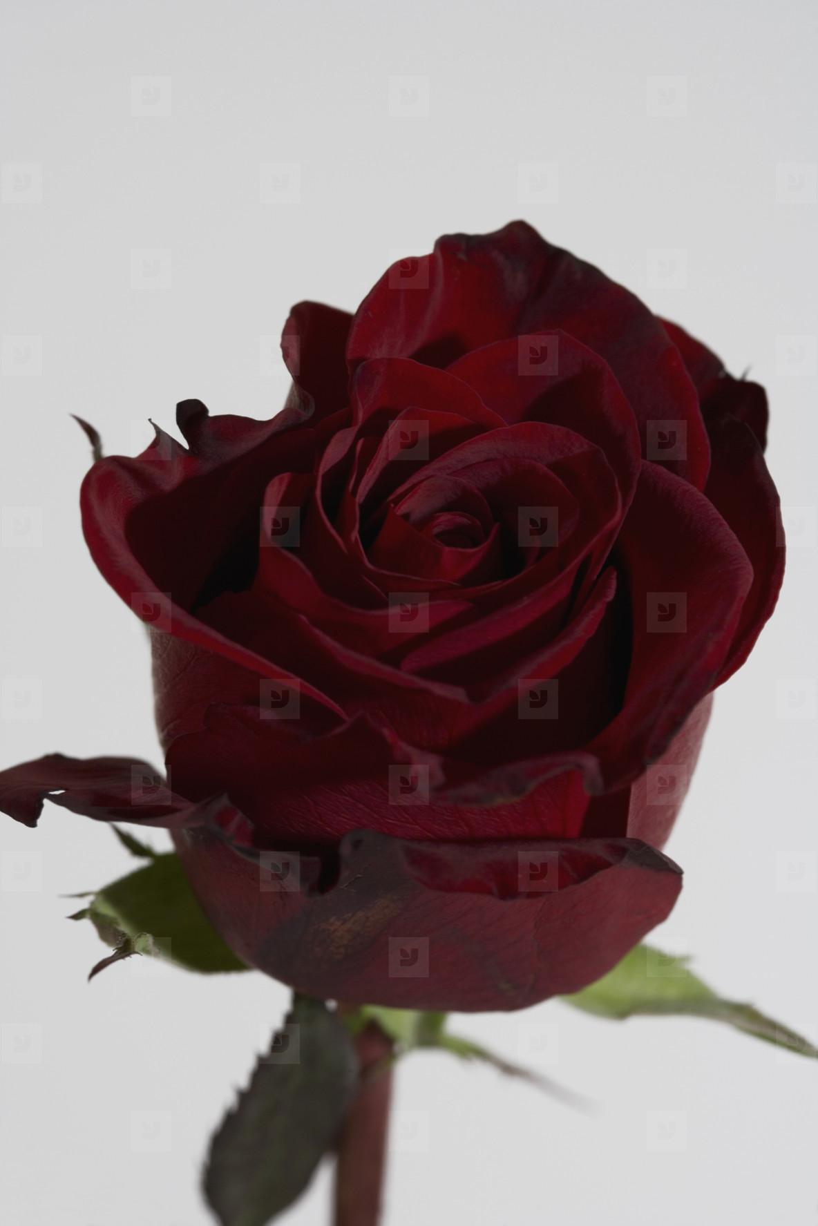 Flower Stills  17