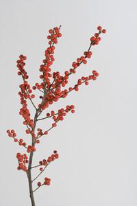 Flower Stills 18