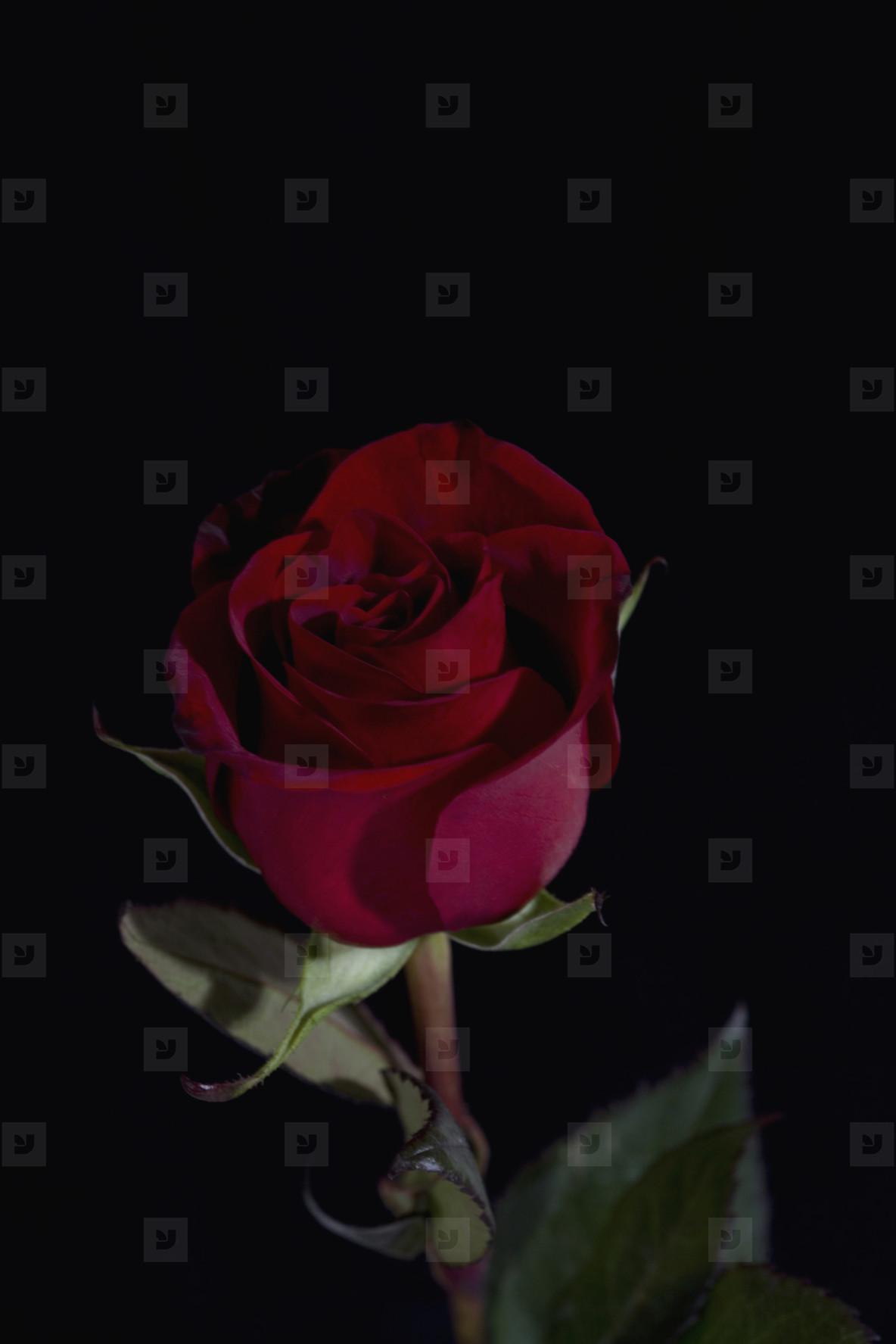 Flower Stills  20