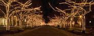 German Christmas Market  15