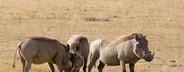 African Safari Scenes 101  02