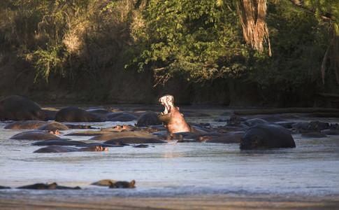 African Safari Scenes 101 03