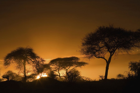 African Safari Scenes 101 06