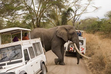 African Safari Scenes 101 07