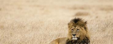 African Safari Scenes 101  08