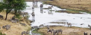 African Safari Scenes 101  09