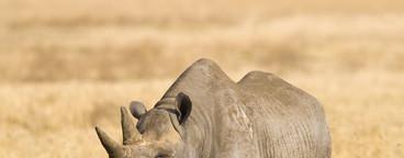 African Safari Scenes 101  10