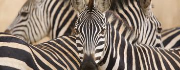 African Safari Scenes 101  12