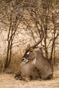 African Safari Scenes 101 13