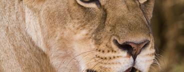 African Safari Scenes 101  14