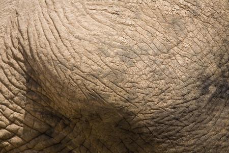 African Safari Scenes 101 15