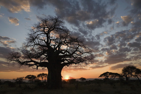African Safari Scenes 101 16