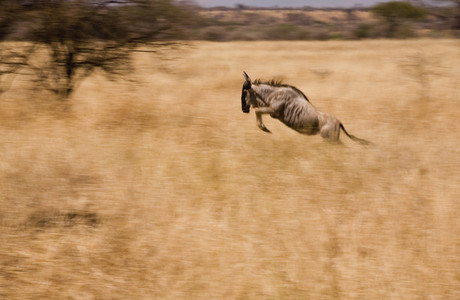 African Safari Scenes 101 17