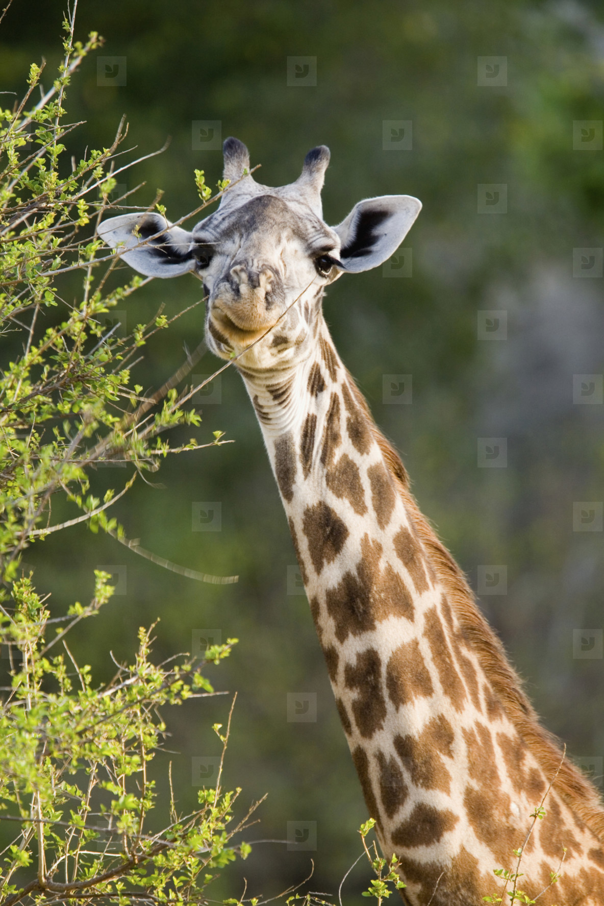 African Safari Scenes 101  18