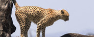 African Safari Scenes 101  19