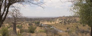 African Safari Scenes 101  21