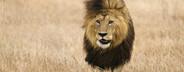 African Safari Scenes 101  22