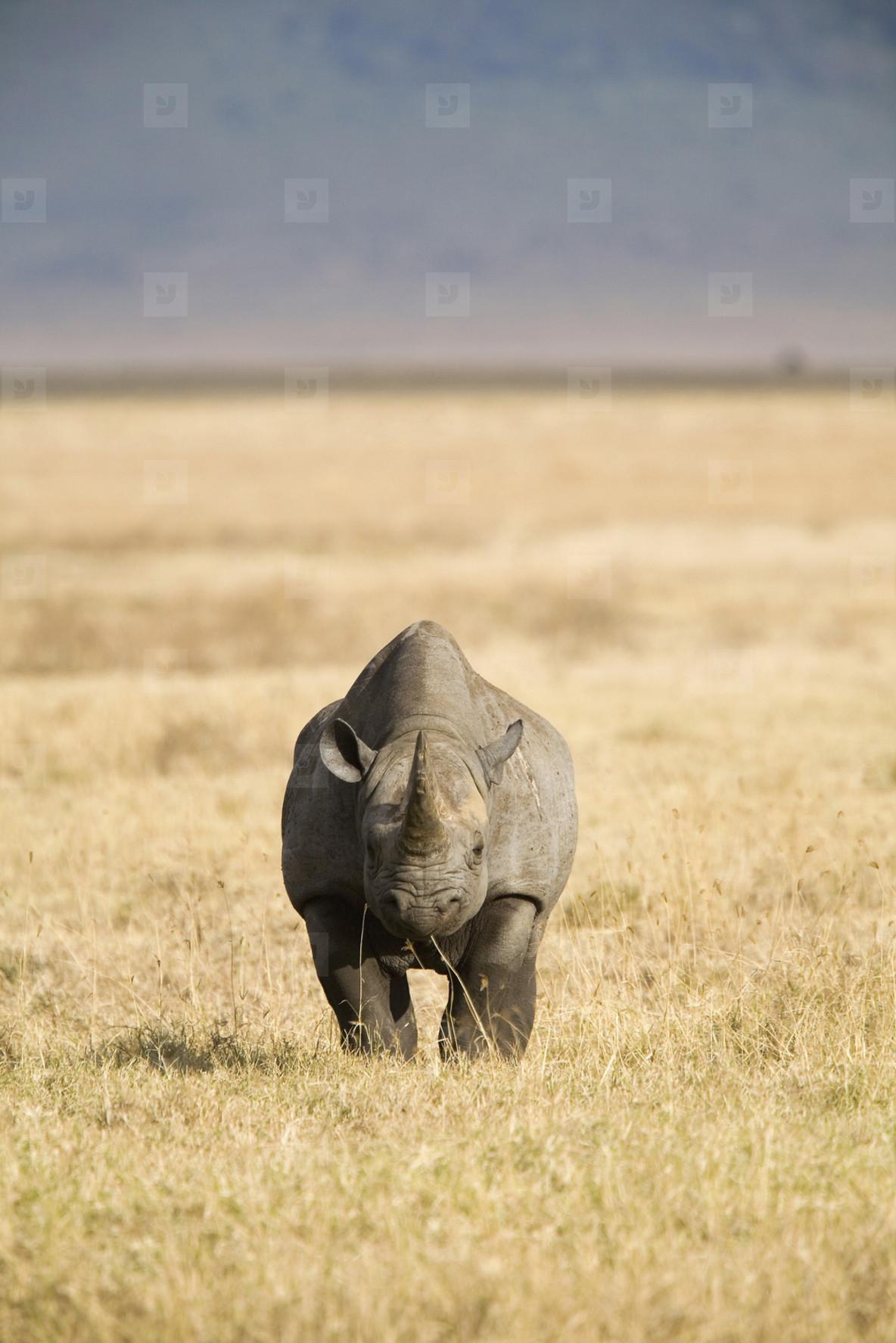 African Safari Scenes 101  23