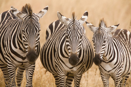 African Safari Scenes 101  25