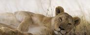 African Safari Scenes 101  26