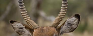 African Safari Scenes 101  28