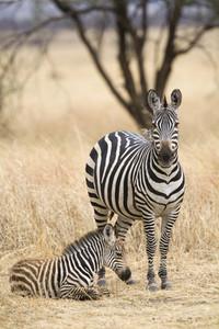 African Safari Scenes 101  29