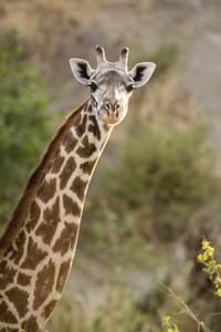 African Safari Scenes 101 30