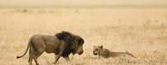 African Safari Scenes 101  31
