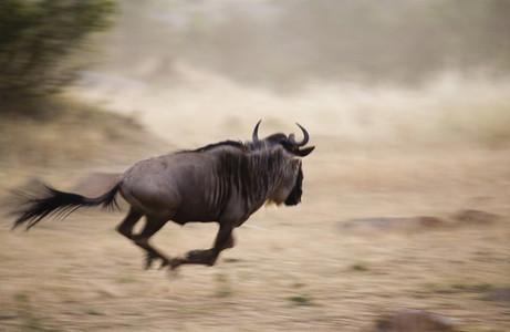 African Safari Scenes 101 32