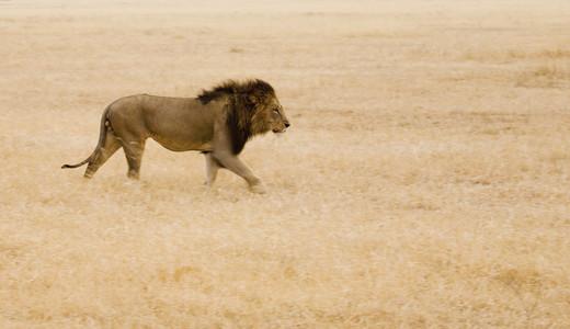 African Safari Scenes 101 34