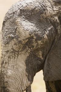 African Safari Scenes 101 35