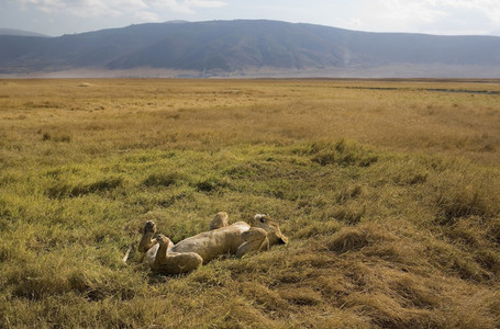 African Safari Scenes 101 36