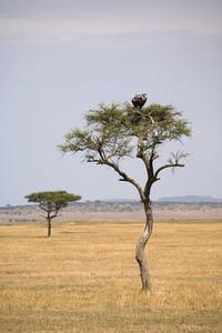 African Safari Scenes 102  01